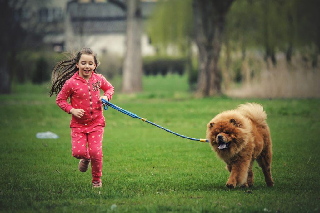 dogcessories-sesja-wiosna-2016-04-96